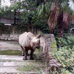 サイさん(上野動物園)